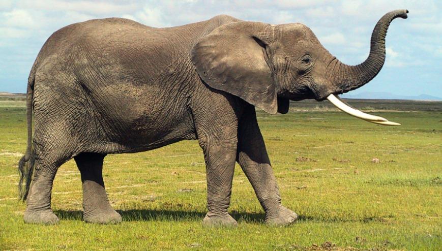 Nearly 90 Elephant Carcasses Found Near Botswana Wildlife