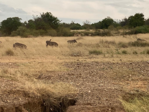 Photo 1: Animals in the Rift value game reserve, photos by Mustapha B Mugisa, 25th Dec 2020.